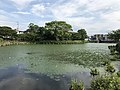 Kumanokoshiike Pond 20170712-9.jpg