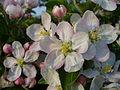 Květy čekající na včelu.JPG