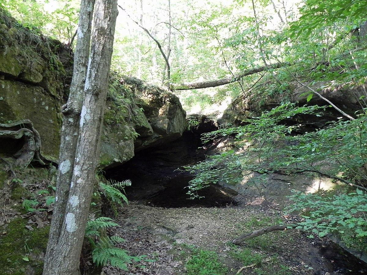 Wildlife forest