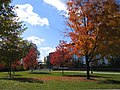 Lafayette College in Autumn.jpg