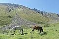 Lake Ala Kul Trek (Kyrgyzstan, August 2019) - 34 (50565180213).jpg