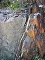 Lamprophyre dike & hornfels (Archean; Route 17 roadcut southeast of Princess Lake & north of Wawa, Ontario, Canada) 3 (48279142182).jpg