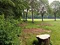 Landschaftsschutzgebiet Wäldchen bei Buer Melle Datei 40.jpg
