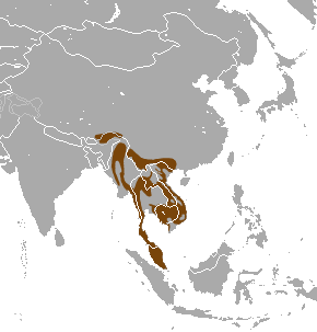 Large-spotted Civet area