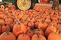 Large group of pumpkins (48829086502).jpg