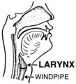 Larynx (PSF).png