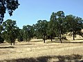 Latrobe Road, Latrobe, California - panoramio (1).jpg