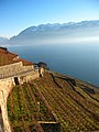 Lavaux- Switzerland - panoramio.jpg