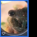 Leafhopper.png