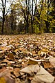Leaves (50958658).jpeg