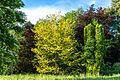 Lederhülsenbaum Queen-Auguste-Victoria-Park (Umkirch) jm30176.jpg
