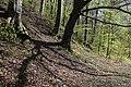 Leitenwälder der Isar 0608.jpg