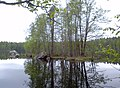 Leivonmäki national park - panoramio (3).jpg
