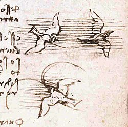 Image illustrative de l'article Codex sur le vol des oiseaux
