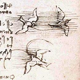 Risultato immagini per Leonardo zoologo