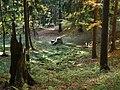 Lesne koscioly 04.jpg