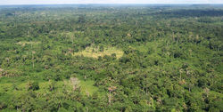 Liberia tropical forest.jpg