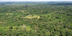 Geography of Liberia - A Liberian tropical forest.