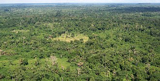 Environmental issues in Liberia - A Liberian tropical forest.