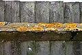 Lichen at Colgate West Sussex England.JPG
