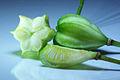 Lilium martagon - fruits 01.jpg
