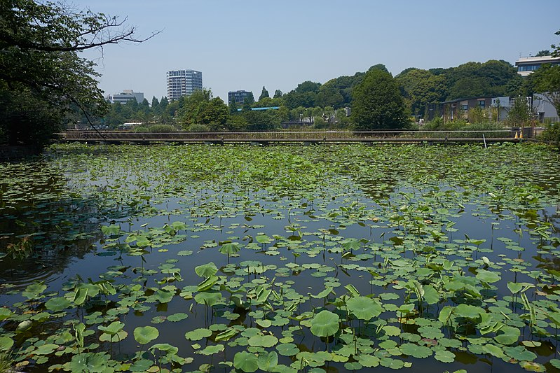 File:Lily Pond, Ueno Park, May 2017.jpg