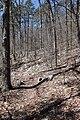 Little Missouri Trail Arkansas.jpg