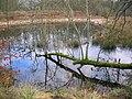 Littlestane Loch remnant at Sourlie.jpg