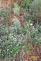 Local flora (MakGi) (34219157233).jpg