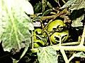 Los Tomates De La Abuela (34151128).jpeg