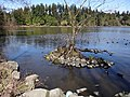 Lost Lagoon - Stanley Park - Vancouver- BC - Canada (8604929154).jpg