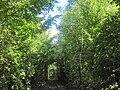Love tunnel-1.jpg