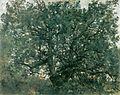 Lovis Corinth Der Eichbaum 1907.jpg