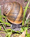 MK-snail007.jpg