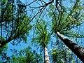 MOs810 WG 2018 8 Zaleczansko Slaski (Natural reserve Modrzewiowa Gora) (8).jpg