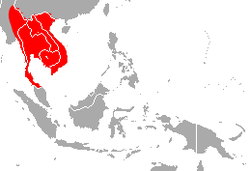 Malayan Horseshoe Bat area.png
