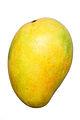 Mango BNC.jpg