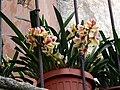Marciana Alta - Blumen im Topf.jpg