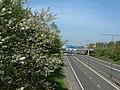 May blossom - geograph.org.uk - 829364.jpg
