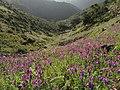 Meadow - panoramio (18).jpg