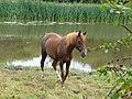 Mersey river - panoramio - Tanya Dedyukhina.jpg