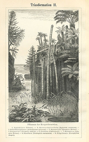 Triassic - Triassic flora as depicted in Meyers Konversations-Lexikon (1885–90)