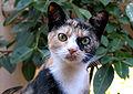 Miss pupik - cat no.18 - ha (by).jpg