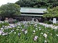 Miyajidake-jinja Iris Festival 03.jpg