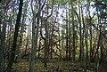 Moat Wood - geograph.org.uk - 1568627.jpg