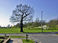 Morden 5 Late in the day on Cannon Hill Common geograph-2376015-by-Ben-Brooksbank.jpg