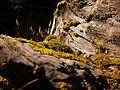 Moss (17035650342).jpg