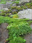 Mosses (8045586571).jpg