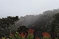 Mount Kemiri mist rolling in.jpg