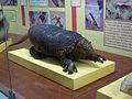 MuseoCienciasNaturalesCba2.JPG